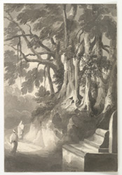 'Tree at Hadjipore.  Novr. 1831'
